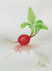 Read more about the article Etude d'un radis à l'aquarelle
